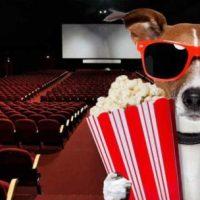 I 100 film che distinguono un cinefilo da un cinofilo.
